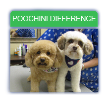 Poochini Difference